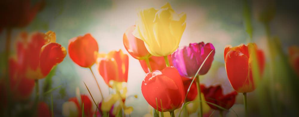 Frühlingserwachen - neues Layout, neue Funktionen